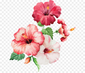 Watercolor: Flowers Watercolour Flowers Watercolor painting Drawing - our mission  png image transparent background