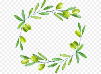 Olive branch Euclidean vector - Drawing green olives decorative borders  png image transparent background