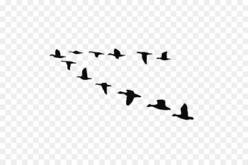 Goose Bird Duck Vector graphics Image - circle of friends  png image transparent background