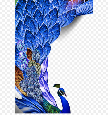 Bird Feather Huawei P10 Asiatic peafowl - Peacock feather  png image transparent background