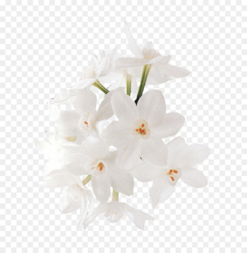 Floral design White Flower - Bouquet of flowers vector material,White flowers  png image transparent background