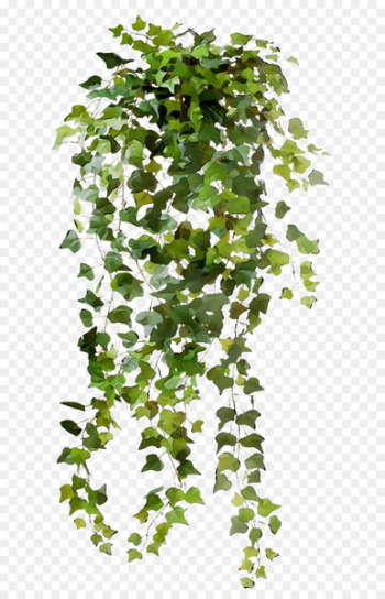 Vine Portable Network Graphics Clip art Common ivy Image -   png image transparent background