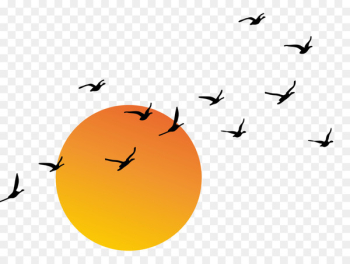 Sunset Euclidean vector - Vector sunset  png image transparent background
