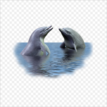 Picture frame Dolphin - dolphin  png image transparent background