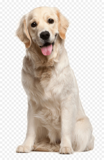 Dog grooming Puppy Cat Pet - White dog  png image transparent background