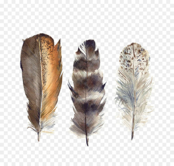 Bird Feather Drawing Watercolor painting - Hand-painted watercolor feather  png image transparent background