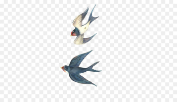 Swallow Bird Drawing Cartoon - Swallows fly Stock Image  png image transparent background