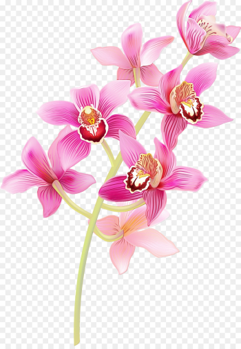 flower flowering plant moth orchid pink petal png image transparent background