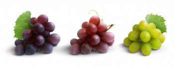 Grapes realistic composition with red rose and white grapes isolated Free Vector