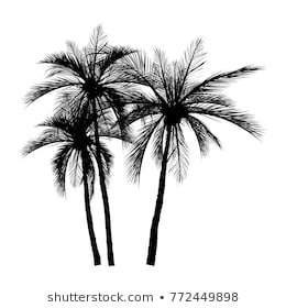 Palm Tree Silhouette Images, Stock Photos & Vectors | Shutterstock png image transparent background