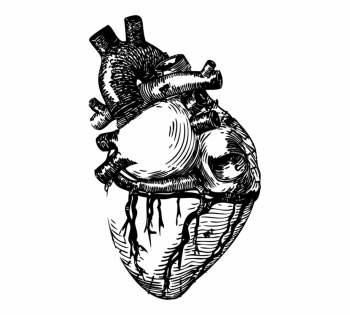 Drawing Line Art Heart Anatomy - Realistic Heart Drawing Png Free ... png image transparent background