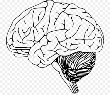 Brain Computer Icons Drawing Clip art - Brain png download - 800*768 ... png image transparent background