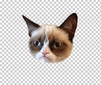 Grumpy Cat Kitten Humour Lolcat PNG, Clipart, Animals, Ben Lashes ... png image transparent background