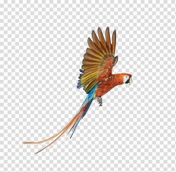 Parrot Bird Battery charger , Flying the colored parrot transparent background PNG clipart png image transparent background