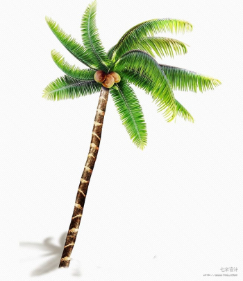 Coconut Arecaceae Tree Price Wind wave, coconut tree transparent background PNG clipart png image transparent background