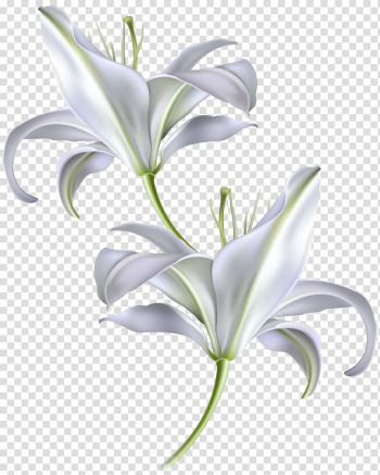 Two white flowers , Skin Sunscreen Moisturizer Facial Anti-aging cream, hand-painted white lily transparent background PNG clipart png image transparent background