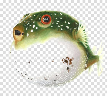 Pufferfish Fugu Drawing Watercolor painting , Puffer fish transparent background PNG clipart png image transparent background