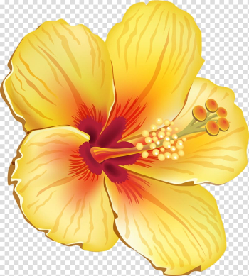 Yellow hibiscus flower illustration, Hawaiian hibiscus Shoeblackplant Flower , tropical flower transparent background PNG clipart png image transparent background