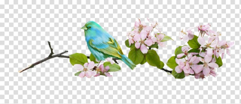 Bird Flower Branch, Birds in the branches of transparent background PNG clipart png image transparent background