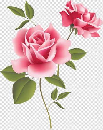 Vintage Roses: Beautiful Varieties for Home and Garden Pink , fuchsia frame transparent background PNG clipart png image transparent background
