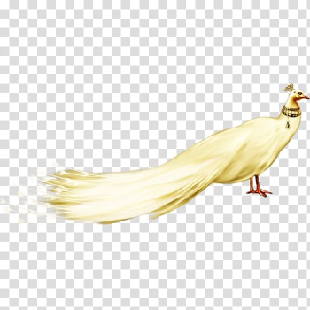 Peafowl White, White Peacock FIG. transparent background PNG clipart png image transparent background