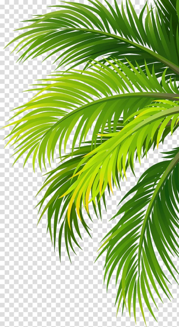 Green palm tree sticker, Coconut water Air filter Plant, Leaves transparent background PNG clipart png image transparent background