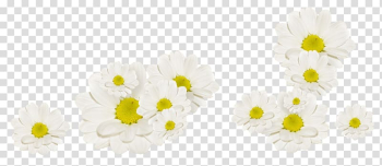 White Flower Fleur blanche, White Chrysanthemum transparent background PNG clipart png image transparent background
