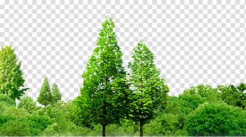 Two green trees illustration, Jingzhou Southern Thailand Forest Tree, Forest trees transparent background PNG clipart png image transparent background
