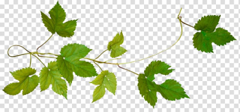 Green leafed plant, Tree Cut Vine Virginia creeper Android, lime frame transparent background PNG clipart png image transparent background
