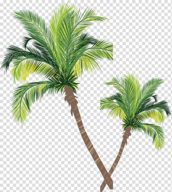 Two green palm trees illustration, Asian palmyra palm Coconut Tree Euclidean , Coconut tree material transparent background PNG clipart png image transparent background