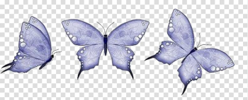 Butterfly Animation, butterfly transparent background PNG clipart png image transparent background
