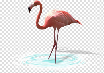 Bird Greater flamingo White stork Heron, Animal painted birds, insects,Flamingos transparent background PNG clipart png image transparent background