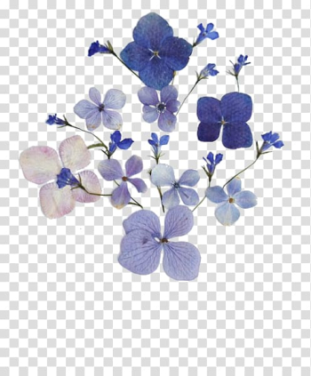 Pressed flower craft Floral design Flower bouquet, flower transparent background PNG clipart png image transparent background