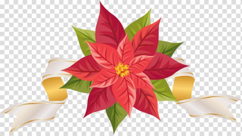 Red and green flowers , Poinsettia , Poinsettia with Ribbon transparent background PNG clipart png image transparent background