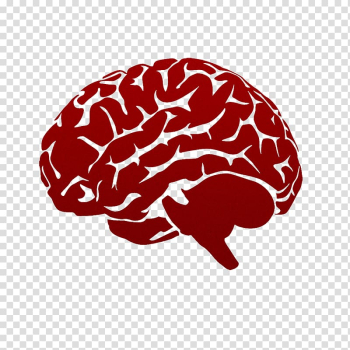 Lateralization of brain function Human brain High-definition television , Abstract brain pattern transparent background PNG clipart png image transparent background