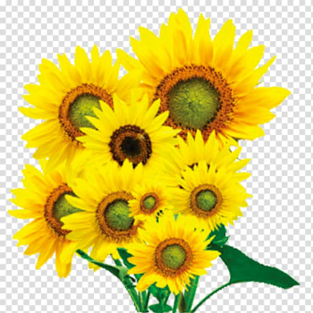 Oil painting Anime Poster, A bunch of sunflowers transparent background PNG clipart png image transparent background