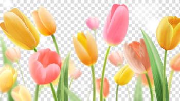 Yellow and pink tulips illustration, Indira Gandhi Memorial Tulip Garden Paper Flower painting, Tulips 40 transparent background PNG clipart png image transparent background