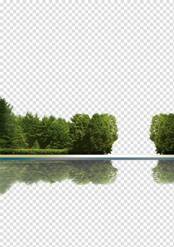 Of body of water, Tree Icon, Trees reflection transparent background PNG clipart png image transparent background