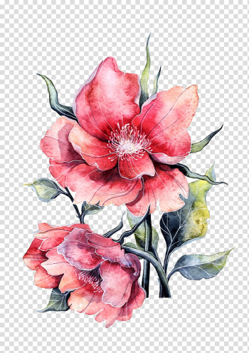 Flower Paper painting Rose, Watercolor peony in full bloom, two pink petaled flowers illustration transparent background PNG clipart png image transparent background