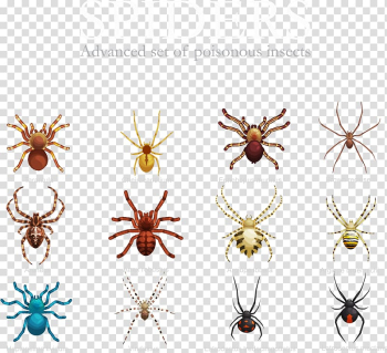 Spider Insect illustration, variety of spiders transparent background PNG clipart png image transparent background