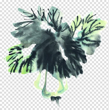 Ink wash painting Chinese cabbage Inkstick Vegetable, Painting cabbage transparent background PNG clipart png image transparent background