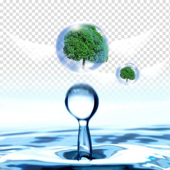 Water Drop Banner, Water droplets in the tree transparent background PNG clipart png image transparent background