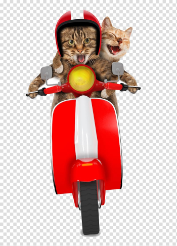 Gray tabby cats, Scooter Cat Greeting card Christmas card Moped, Motorcycle transparent background PNG clipart png image transparent background