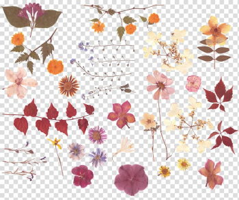 Assorted-color petaled flowers illustrations, Pressed flower craft Nosegay Flower bouquet, Dried leaves flowers transparent background PNG clipart png image transparent background