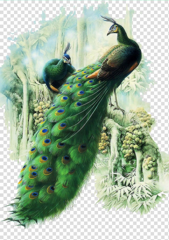 Painting Work of art Peafowl, peacock, green peacock transparent background PNG clipart png image transparent background