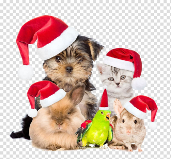 Pets are also buckle creative Christmas HD Free transparent background PNG clipart png image transparent background