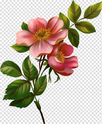 Flower , chinese flower transparent background PNG clipart png image transparent background