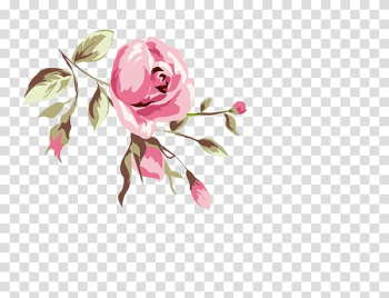 Rose Animation, Watercolor flowers transparent background PNG clipart png image transparent background