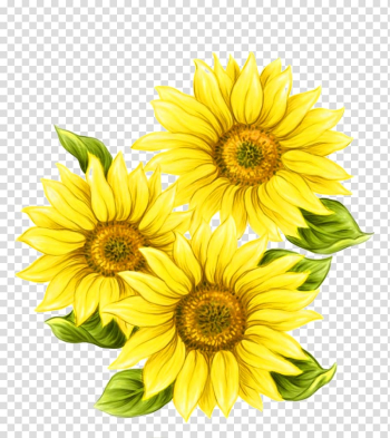Yellow flowers, Watercolor painting Common sunflower, Yellow hand painted sunflower decorative pattern transparent background PNG clipart png image transparent background