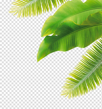 Fruit Flower, green leaves, green banana leaves and coconut tree leaves transparent background PNG clipart png image transparent background